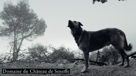 Chateau-de-Seneffe_JF-Spricigo-940x529